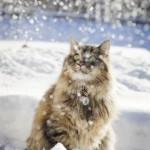 sneg_kot