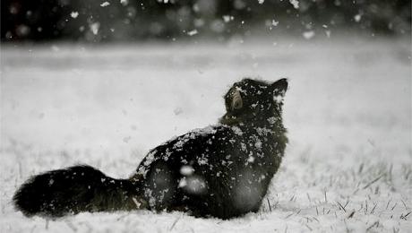 кот снежинка